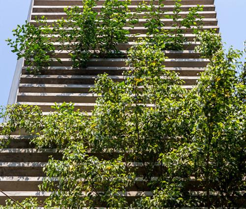 Khám phá mẫu nhà phố đẹp nhiều cây xanh của anh Khang Củ Chi