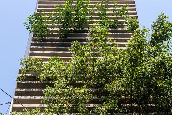 Khám phá mẫu nhà phố đẹp nhiều cây xanh của anh Khang Củ Chi - 01