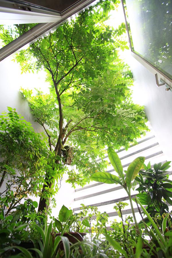 Khám phá mẫu nhà phố đẹp nhiều cây xanh của anh Khang Củ Chi - 07