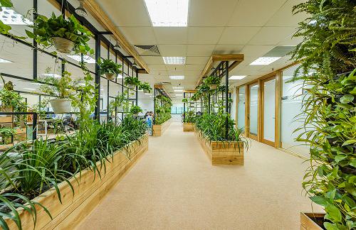 Nội thất văn phòng đẹp tràn ngập ánh sáng và cây xanh tại Hà Nội