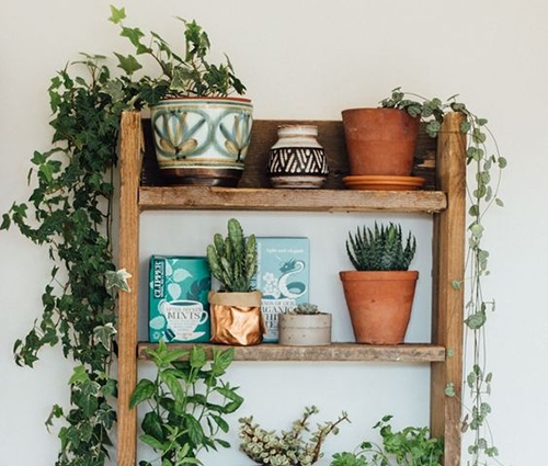 Giàn dây leo trong nhà cho không gian hòa nhịp với thiên nhiên xanh mát