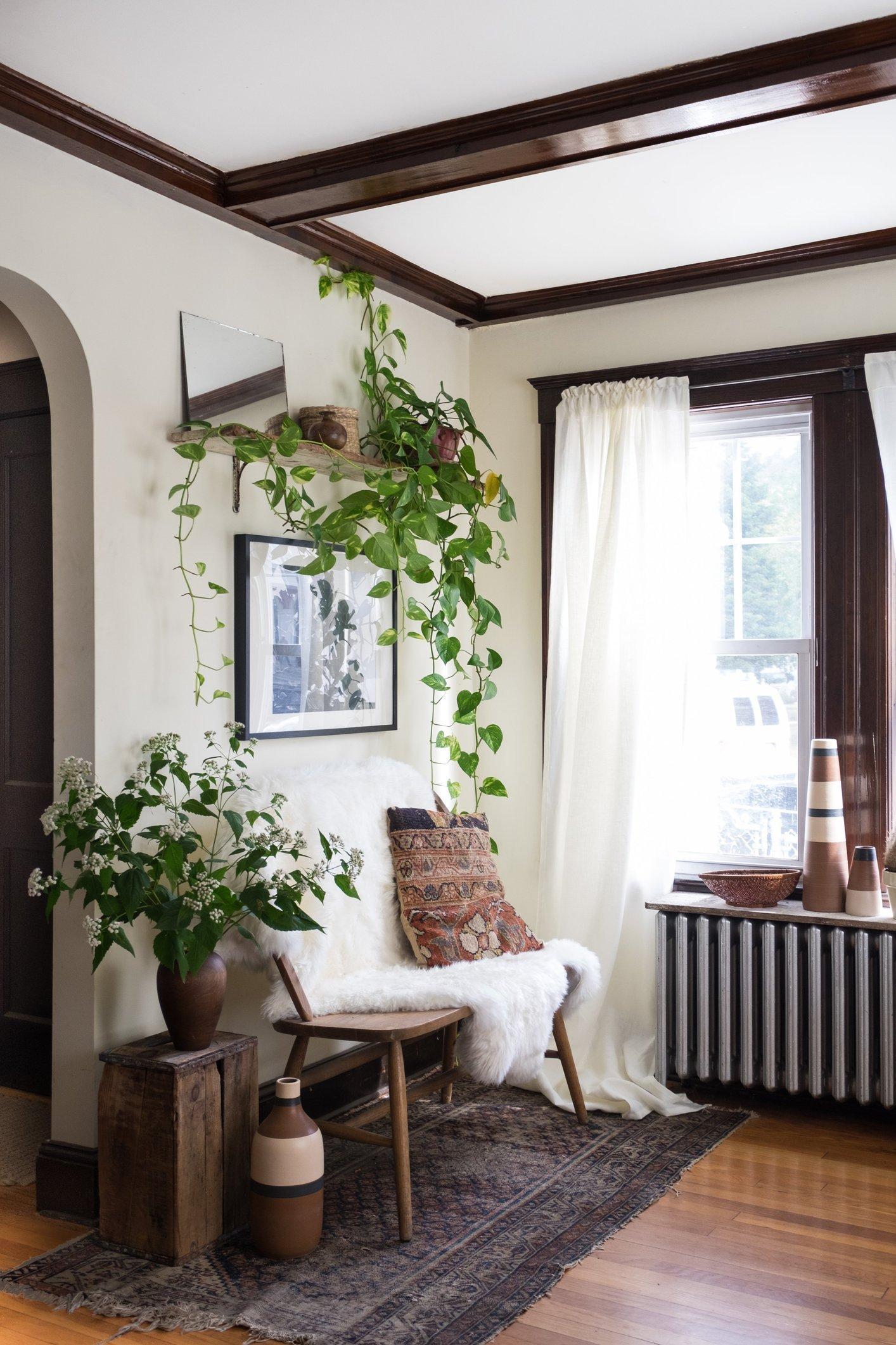 Top 4 cách trồng cây trong nhà cứ nhìn là mê