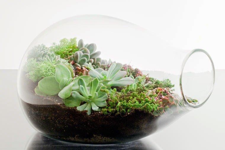 Trẻ hóa không gian nhờ những ý tưởng trồng cây trong nhà siêu chất