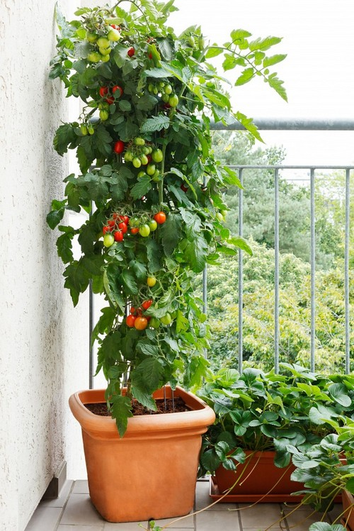 Mách bạn bí quyết làm vườn xinh cho nhà nhỏ