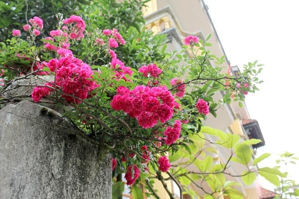 Nên chọn hoa gì cho kế hoạch trang trí ban công tươi sắc