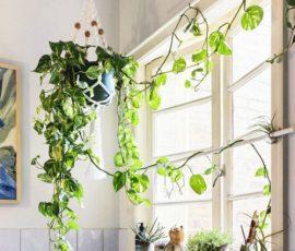 Những vườn treo trong nhà mang sức mạnh của mẹ thiên nhiên