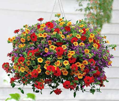 Nên chọn hoa gì cho kế hoạch trang trí ban công tươi sắc?
