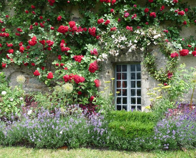 Cách trang trí nhà thêm duyên với giàn hoa leo xinh xắn