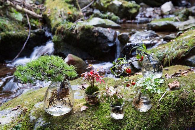 Nhà nhỏ đậm chất nghệ thuật với tiểu cảnh Aqua bonsai