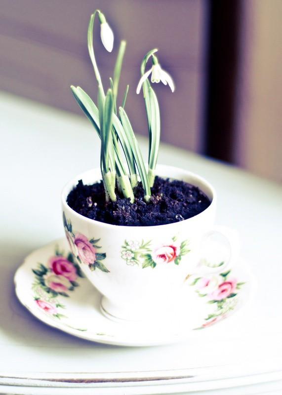 Gợi ý trồng tiểu cảnh bằng ấm chén siêu lãng mạn đón Tết