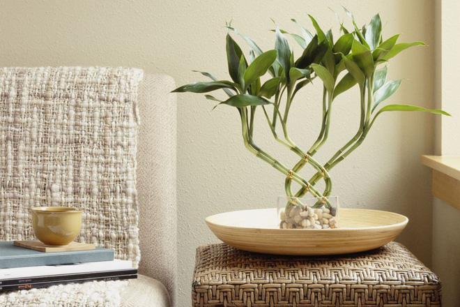 7 loại cây mang tài lộc vào nhà nên trồng vào dịp Tết