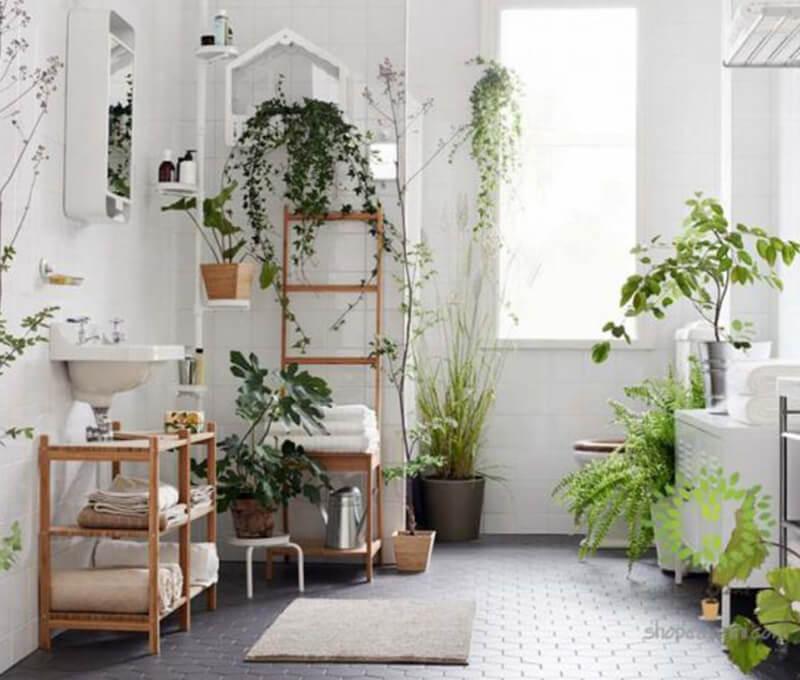 Lưu ý khi trồng cây xanh trong nhà ống 3 tầng mặt tiền 5m