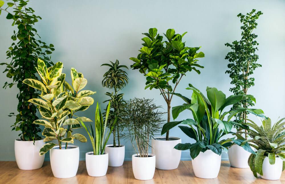 5 sai lầm khi trồng cây trong biệt thự 9x15m gây ảnh hưởng sức khỏe nên tránh